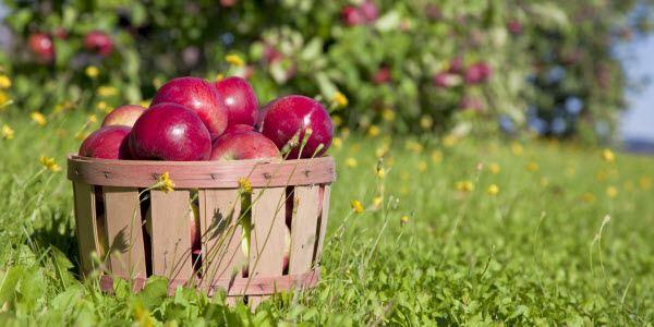 Arizona Apple Annie's Orchard