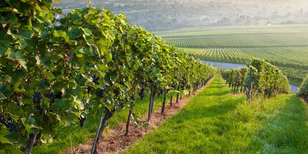 Coronado Vineyards & Wine Tasting at Arizona